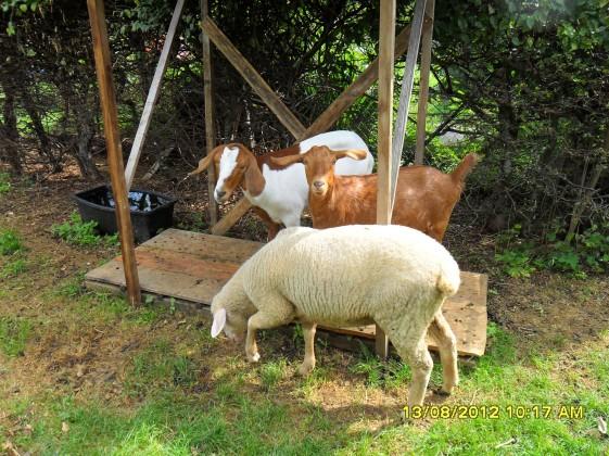 Boeckli, Franzi & Phoebe in Helmas Garden