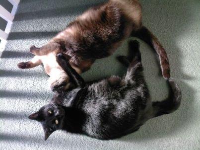 Suki and tina